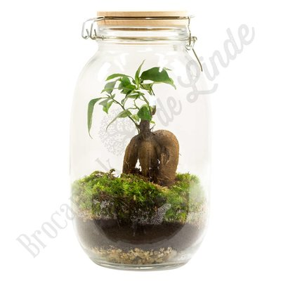 "Plant terrarium ""Urban Jungle - small"""