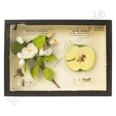 """Insectenlijst schadelijke insecten appels """"No. 21"""""""