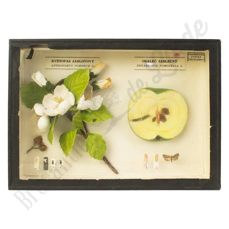 Insectenlijst insecten die schadelijk zijn voor appels