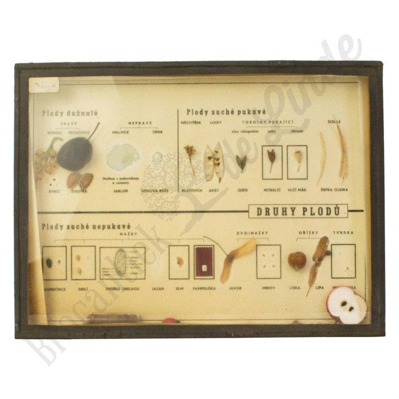 Oude vitrinelijst met verschillende soorten zaden