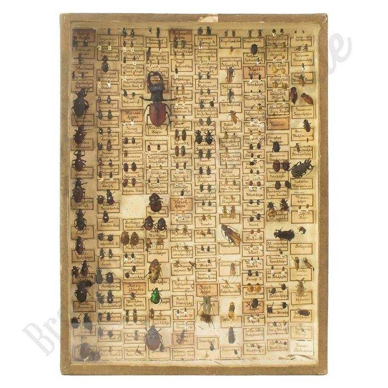 Antieke insectenlijst met verschillende kevers en torren