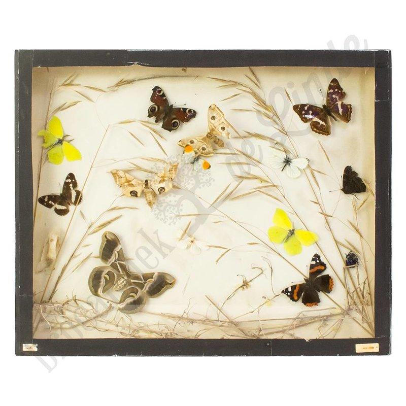 Vlinderlijst met daarin Europese vlinders