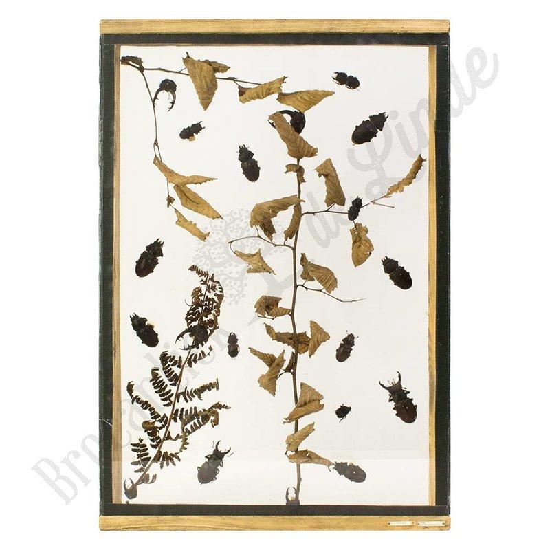 Insectenlijst met kevers en torren