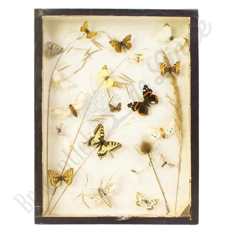 Vlinderlijst Europese vlinders