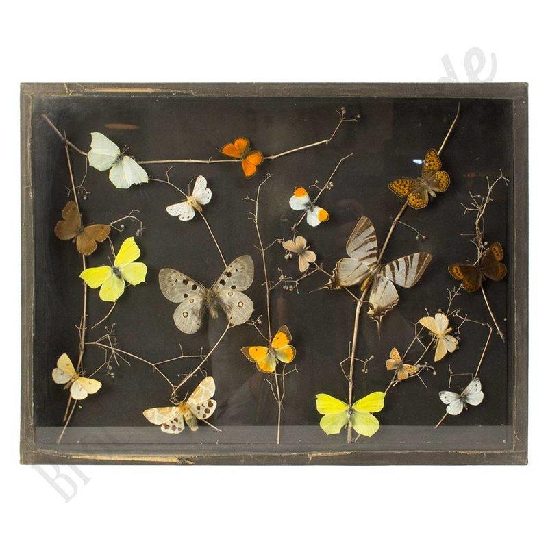"""Vintage vlinderlijst Europese vlinders  """"No.31"""""""