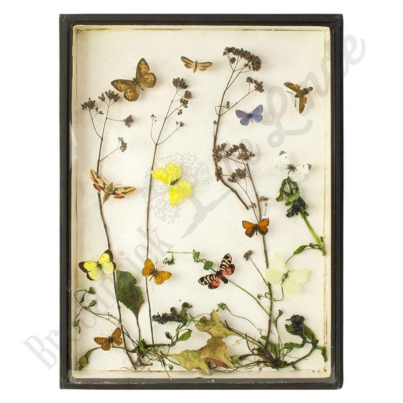 """Vintage vlinderlijst """"No. 32"""""""