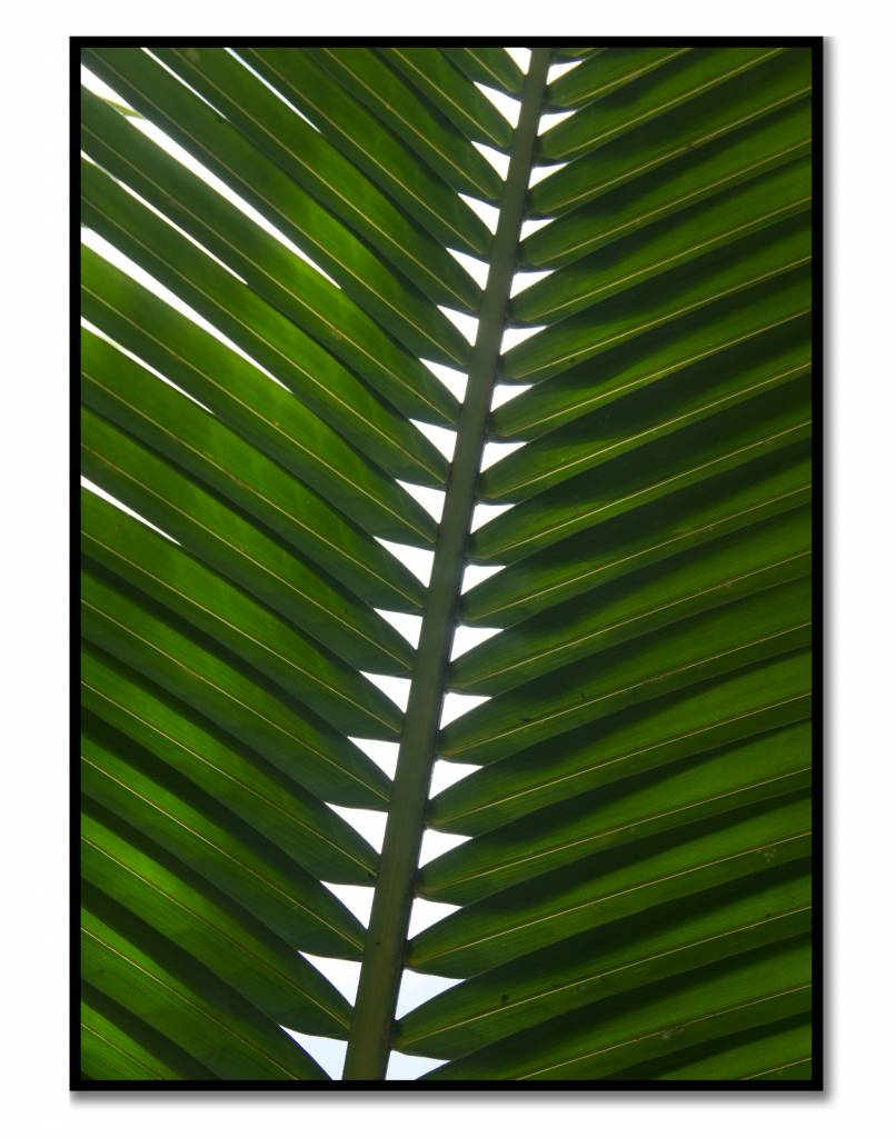 livstil Green Palm Leaf