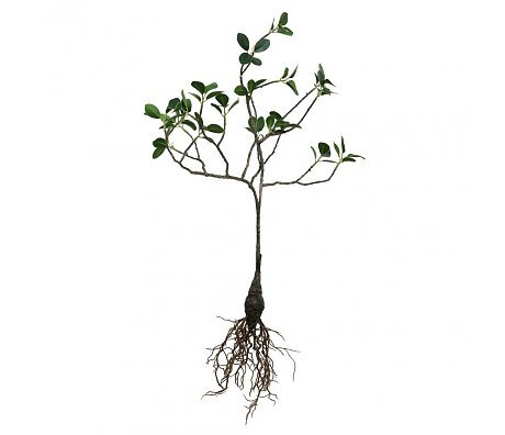 Hk Living Hk living groene tak boompje met wortel 53 cm
