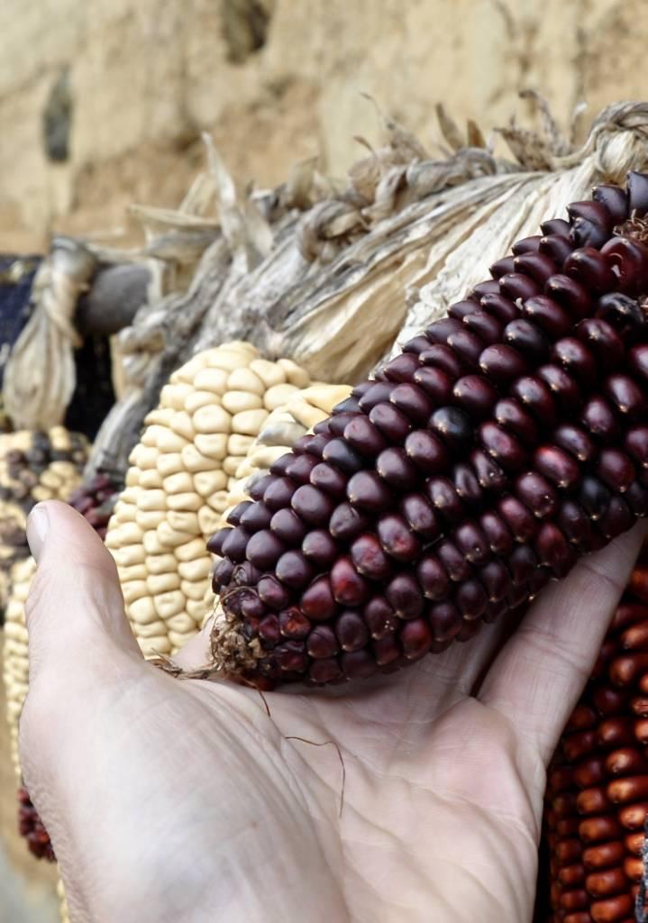 Poudre de maïs violet, 200g