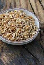 Kamut graan (oude tarwe soort)
