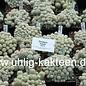 Escobaria sneedii      CITES (dw)