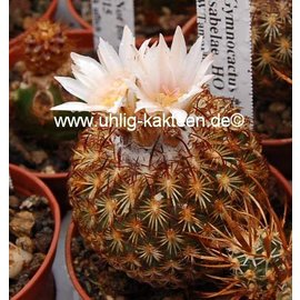 Gymnocactus ysabelae      CITES