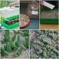 Siembra Top Set 1 Cactus y Suculentas Mix
