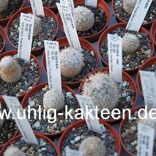 Escobaria spec.  PG 330