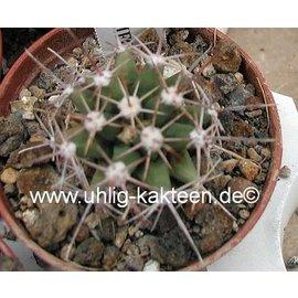 Ferobergia PRIFOR / FOR R3 x PRIFOR / FOR