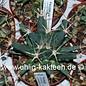Ferobergia Leuchtenbergia  x `Violet`