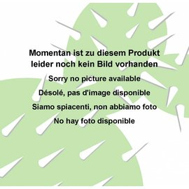 Echinopsis-Hybr. `Winkel` Rheingold 233