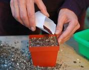 Starter packages seeds