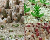 Mezclas de semillas