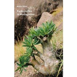 Pachypodium in Madagaskar Walter Röösli