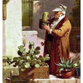 Identificación de cactus y otras suculentas
