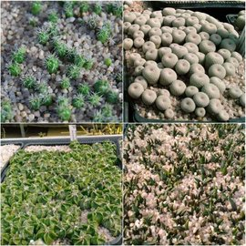 Seed Mix Cactus Special