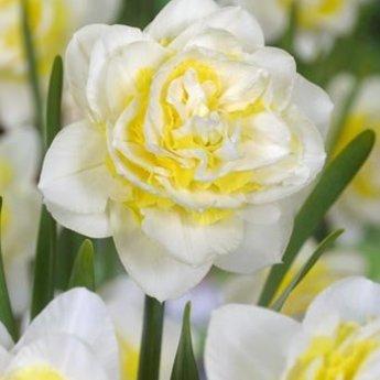 Narcissus Lingerie