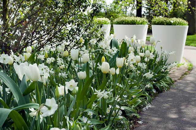 Home   Gardening Tips   modern garden Impressions. modern garden Impressions   Tulip Store