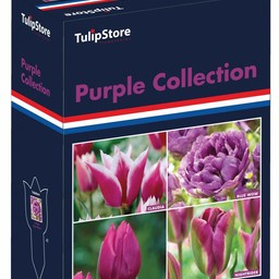 Purple Collection Gift Box