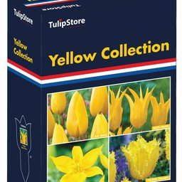 Yellow Collection Gift Box
