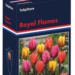 Royal Flames Gift Box