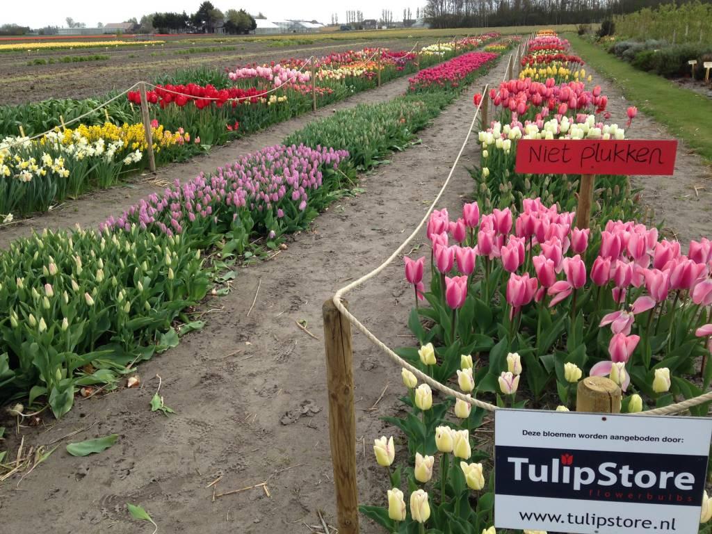 Tulip Store Show Garden in volle bloei!