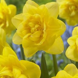Narcis Sherborne