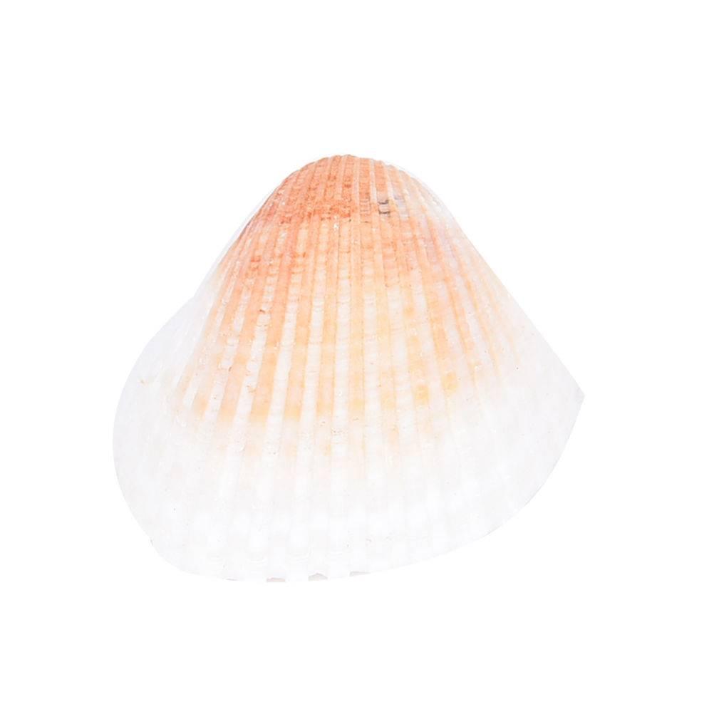 20 stks-set Natuurlijke Shell Diy Aquarium Decoratie Shell Craft Voor Huisdecoratie