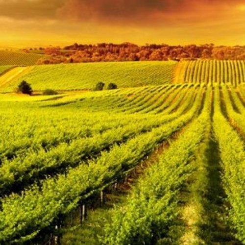 Australische wijn