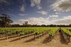 Wijn uit Langhorne Creek