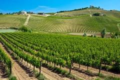 Abruzzo Wijnen