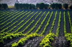 Wijn uit Sardinië