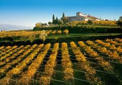 Veneto Wijn