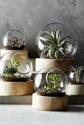 J-Line Plant terrarium