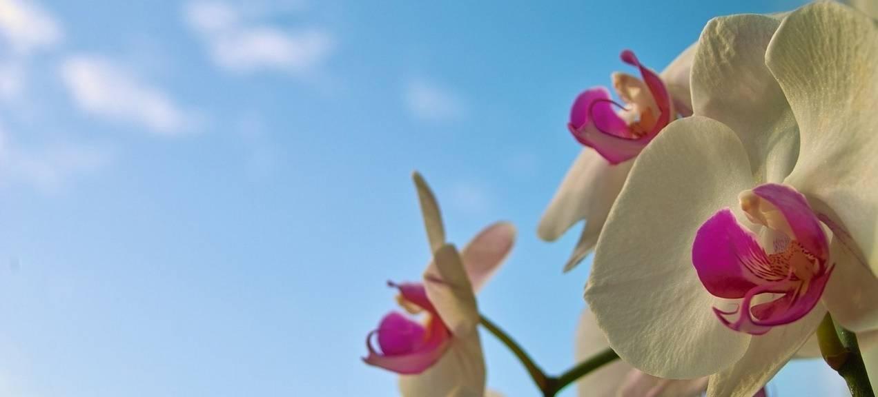 Vanaf 40% korting op boeketten & planten>>