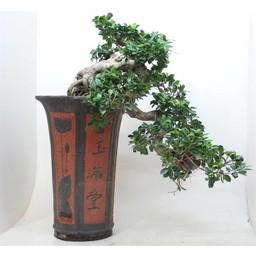 Bonsai Cascade in keramiek  ↨105cm Ø46cm