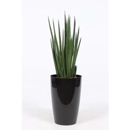 Sansevieria Cylindrica ↨ 90 cm Ø 29 cm