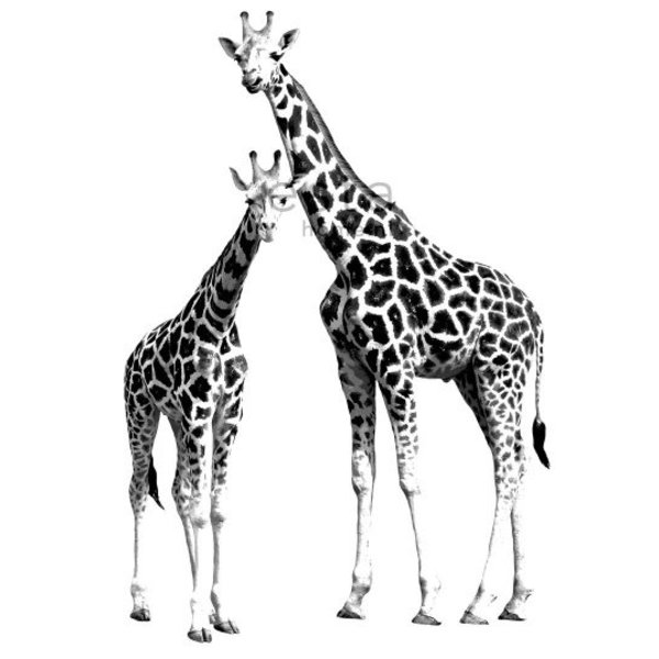 Everybody Bonjour PhotowallXL Giraffes