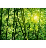 Dutch Wallcoverings Wizard & Genius fotobehang Bamboo forest 00123