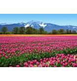 Dutch Wallcoverings Wizard & Genius fotobehang Tulips 00137