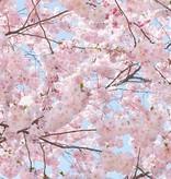Dutch Wallcoverings Wizard & Genius fotobehang Pink blossoms 00155