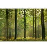 Dutch Wallcoverings Wizard & Genius fotobehang Autumn forest 00216
