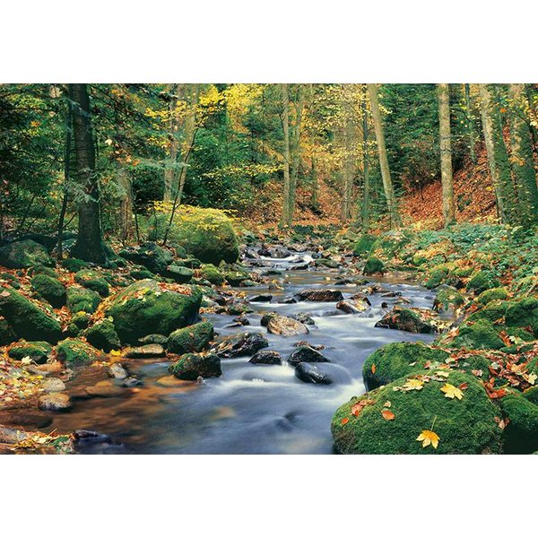 Dutch Wallcoverings Wizard & Genius fotobehang Forest stream 00278