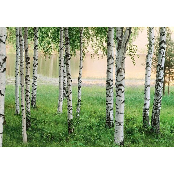 Dutch Wallcoverings Wizard & Genius fotobehang Nordic forest 00290